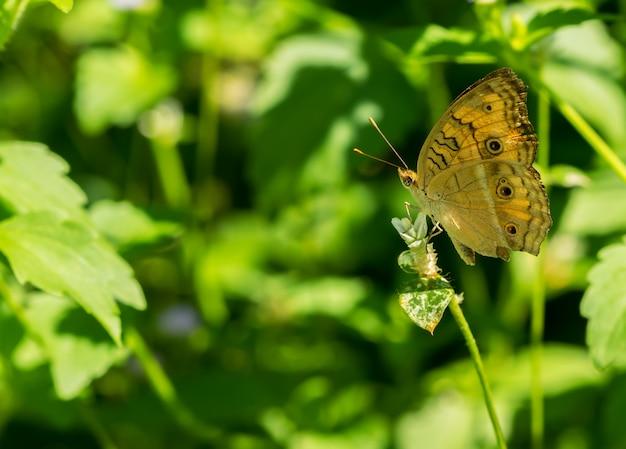 La farfalla si è appollaiata un fiore sulla priorità bassa verde della natura