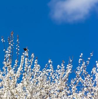 La farfalla sui rami di un albero di primavera in fiore. spazio libero per il testo. copyspace. messa a fuoco selettiva