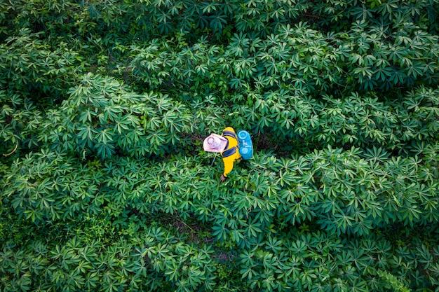 La fattoria e l'agricoltore della tapioca stanno spruzzando l'erba nelle terre agricole