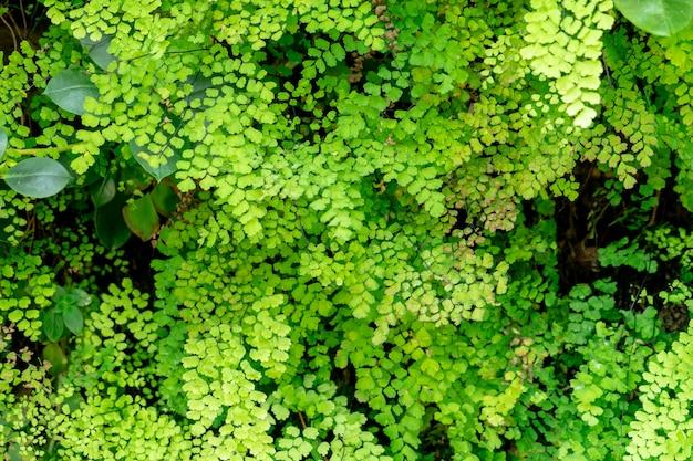 La felce verde lascia nella struttura e nel fondo del giardino