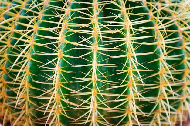 La fine in su di piccolo cactus in piccoli vasi sta sviluppando nell'azienda agricola