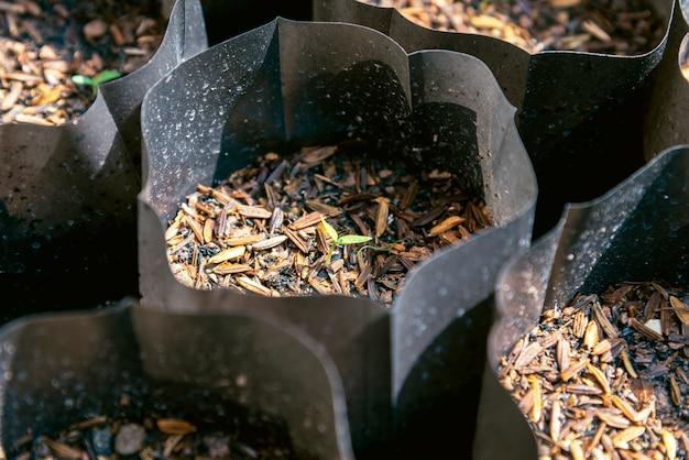 La fine su di giovani alberi verdi in plastica nera coltiva le borse.