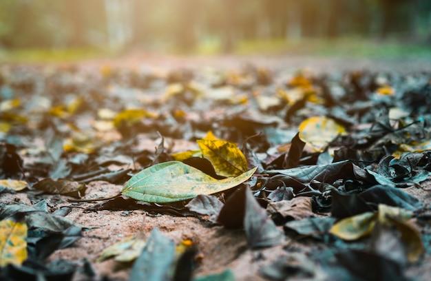 La foglia asciutta cade sulla terra nella foresta alla mattina