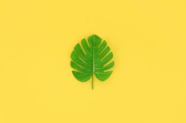 La foglia di monstera di palma tropicale si trova su una carta colorata pastello.