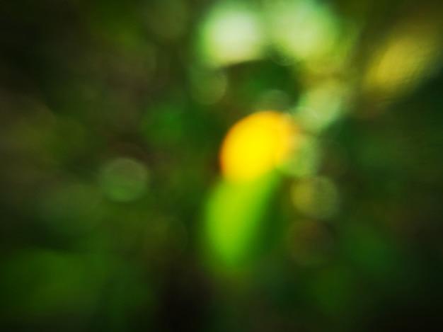 La foglia verde scuro ha offuscato il fondo astratto e la luce solare gialla con bokeh