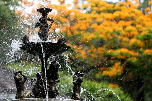 La fontana nel giardino e ha fiori di pavone sta fiorendo.