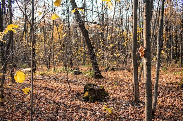 La foresta del ceppo lascia l'autunno del contesto del fondo di struttura