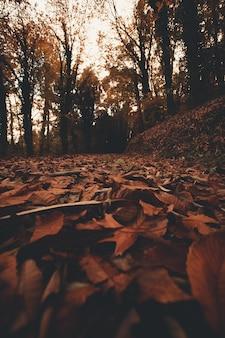 La foresta in autunno dal pavimento