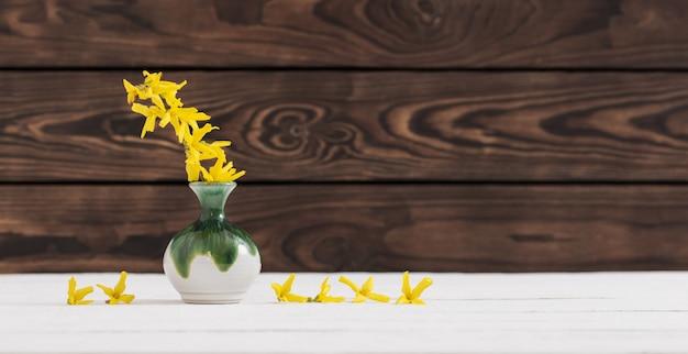 La forsizia fiorisce in vaso su fondo di legno scuro