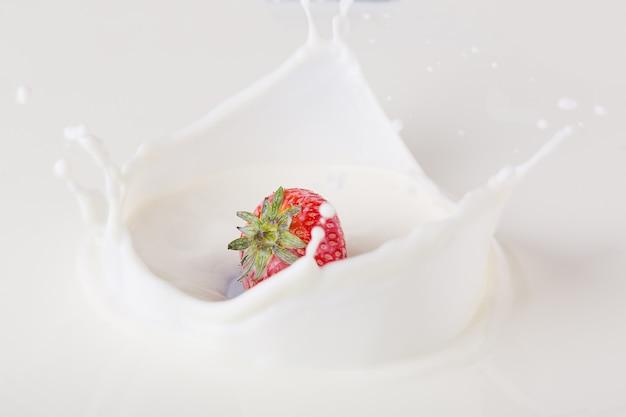 La fragola rossa che cade nel latte sul piatto bianco con spruzza