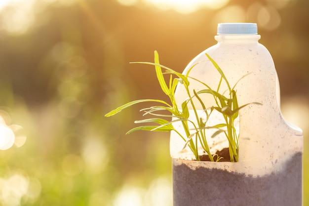 La gente che pianta verdura in bottiglia di plastica