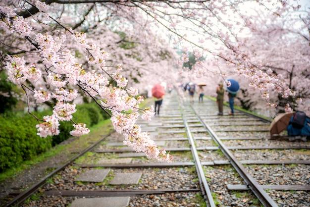 La gente gode della stagione primaverile all'inclinazione di keage con sakura a kyoto, in giappone.