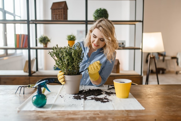 La giovane donna cambia il terreno nelle piante domestiche