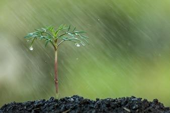 La giovane pianta che cresce nel suolo e l'acqua cadono su come risparmi il concetto del mondo