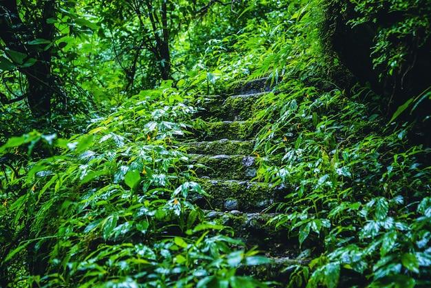La giungla la stagione delle piogge al doi intanon chiangmai