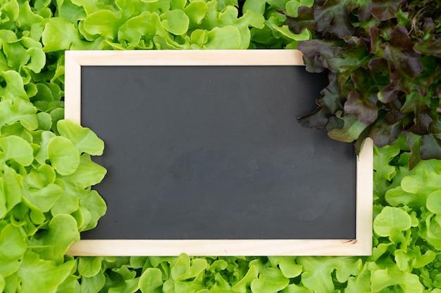 La lavagna dello spazio in bianco sulla verdura idroponica per aggiunge il testo