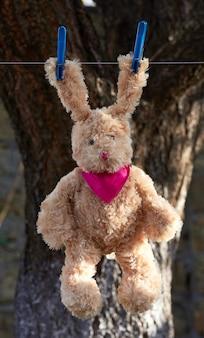 La lepre con le orecchie lunghe si appende su una corda dopo il lavaggio e si asciuga