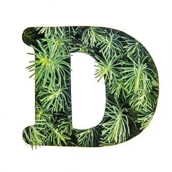 La lettera d dell'alfabeto inglese da erba verde
