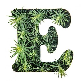 La lettera e dell'alfabeto inglese da erba verde