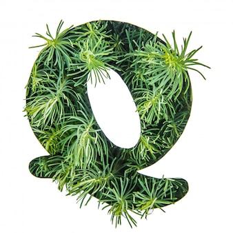 La lettera q dell'alfabeto inglese da erba verde