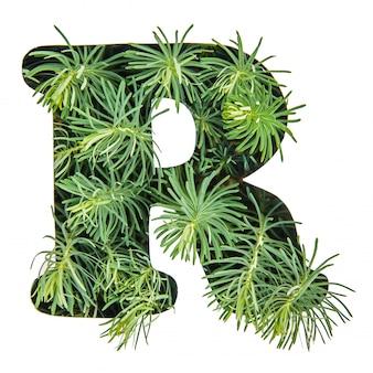 La lettera r dell'alfabeto inglese da erba verde