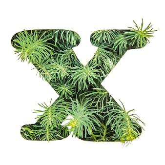 La lettera x dell'alfabeto inglese da erba verde
