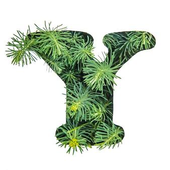 La lettera y dell'alfabeto inglese da erba verde