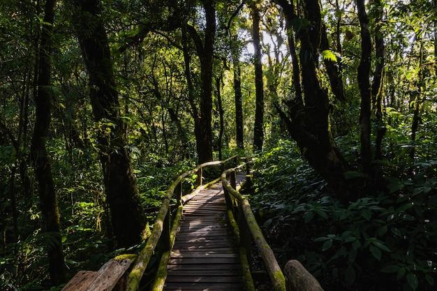 La luce e l'ombra della foresta pluviale in doi inthanon, chiang mai, thailandia