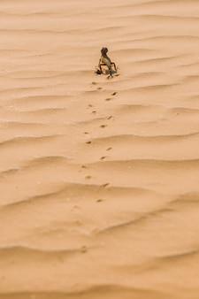 La lucertola attraversa il deserto e lascia tracce nella sabbia.