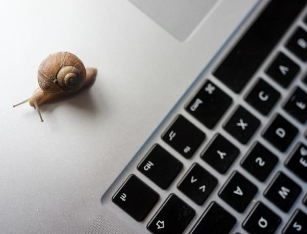 La lumaca che si muove lentamente significa internet lenta