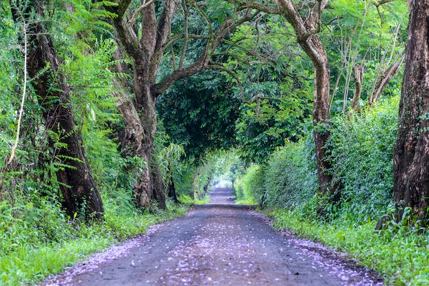 La lunga strada accanto a grandi alberi verdi come il tunnel di un albero