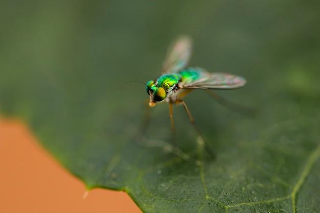 La macro foto della serra fa volare nell'albero forestale