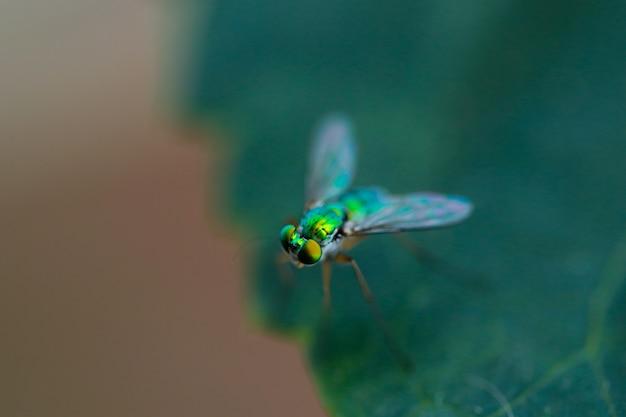 La macrofotografia di green house vola nell'albero forestale