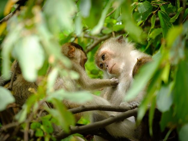 La mamma guardò la piccola scimmia con occhi gentili