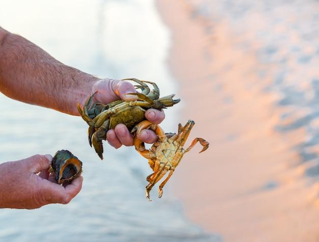La mano che tiene il granchio d'acqua dolce o il granchio del campo di riso vive nel canale di irrigazione.
