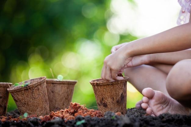 La mano del bambino che pianta le giovani piantine dentro ricicla i vasi di fibra nel giardino