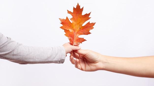 La mano del bambino e della mamma tiene insieme la foglia arancio della quercia di autunno su fondo bianco il concetto è venuto l'autunno.