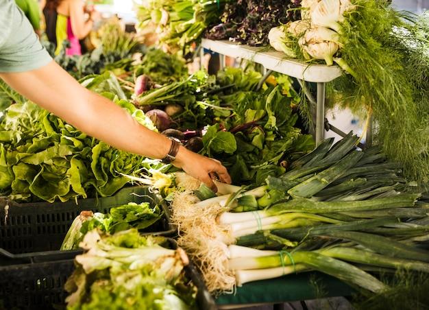La mano del consumatore maschio che sceglie la verdura fresca verde alla stalla del mercato
