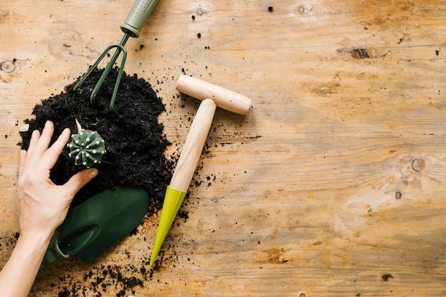 La mano del giardiniere che pianta la pianta del cactus con il suolo e lo strumento di giardinaggio contro la superficie di legno