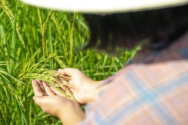 La mano dell'agricoltore che tiene una risaia