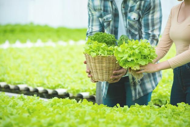La mano dell'uomo e della donna tengono il canestro di lattuga verde nell'azienda agricola idroponica della serra