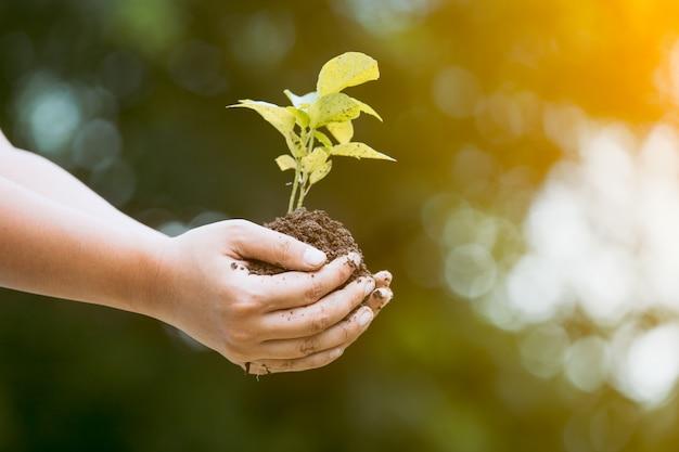 La mano della donna che tiene il giovane albero per prepara nel suolo come risparmi il concetto del mondo