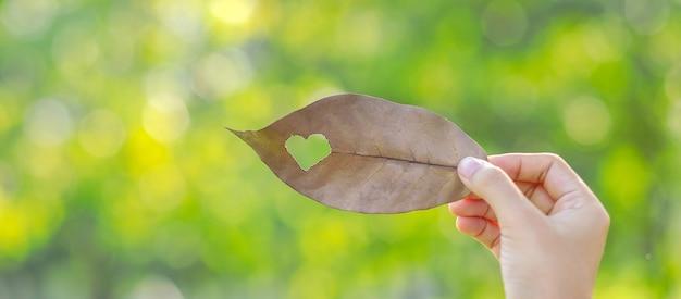 La mano della donna che tiene la foglia secca con forma del cuore su sfondo naturale verde