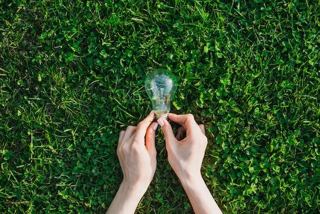 La mano della femmina che tiene lampadina sopra erba verde