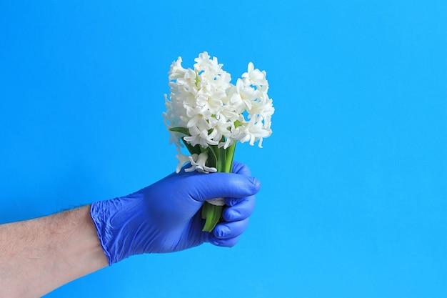 La mano di medico in guanto che tiene un mazzo di fiori bianchi isolato su blu, copia spazio.