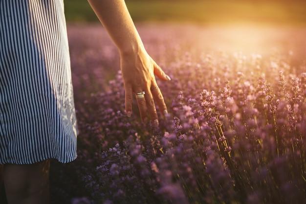 La mano di una ragazza mentre tocca i picchi della lavanda al tramonto.