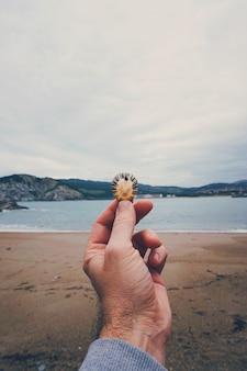 La mano e il guscio in spiaggia