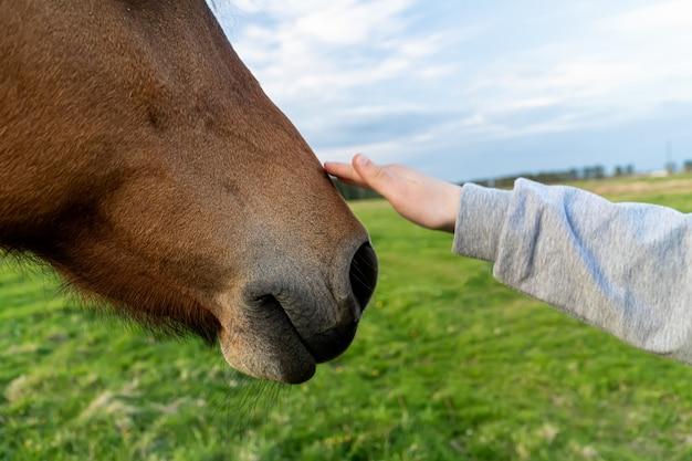 La mano tocca la fine della testa di cavallo in su