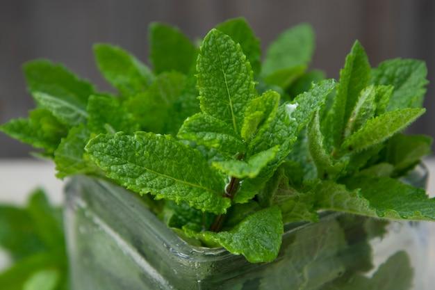 La menta piperita lascia la priorità bassa. l'estate beve l'ingrediente, il cocktail. foglie di menta ecologica da giardino.