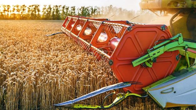 La mietitrebbia raccoglie grano maturo. orecchie mature del giacimento di oro sul cielo arancio nuvoloso di tramonto. concetto di un raccolto ricco. immagine di agricoltura